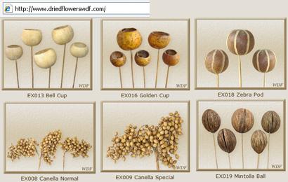 driedflowerswdf2