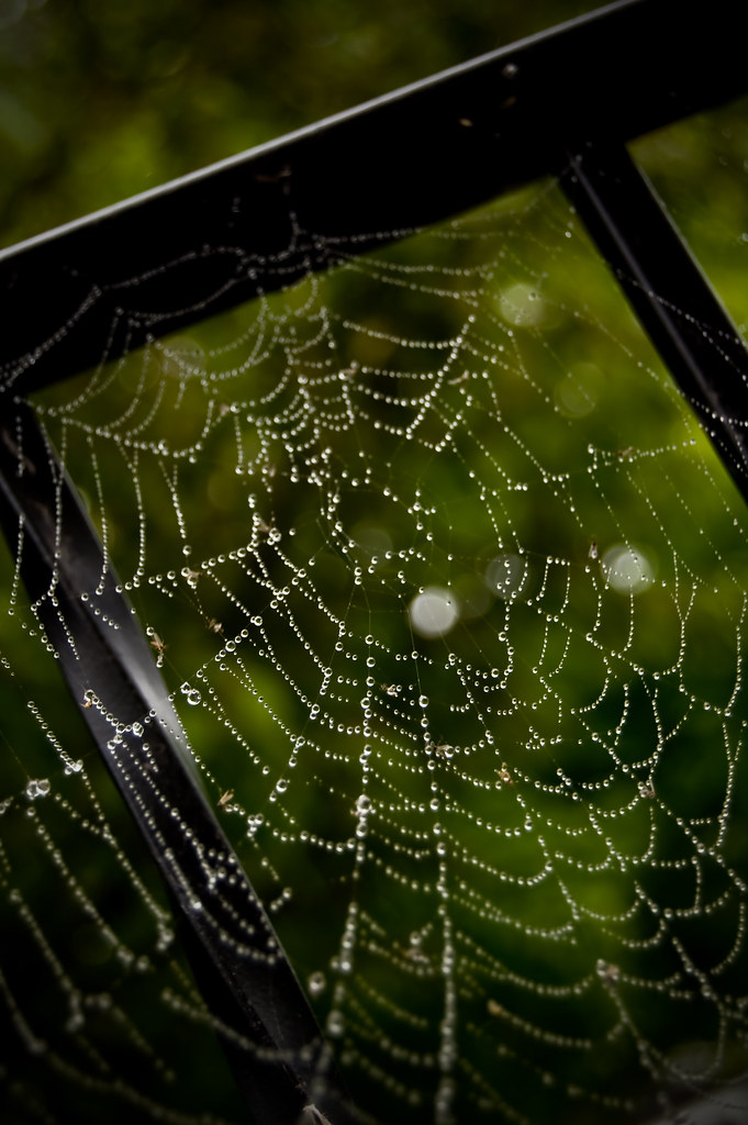 Pearly Web.