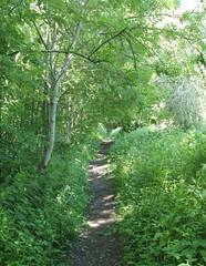 Path (amy's antics) Tags: trees sunlight path foliage paths caminhos