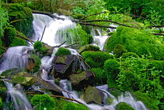 Horton Creek, waterfall over moss covered rocks