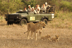 MMC226 (best_destinations) Tags: elephant game photo lion reserve safari mala rino