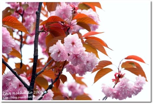 Hokkaido_0874