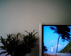 【写真】VQ1005で撮影した室内(リビング)