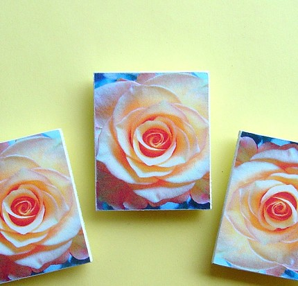 Set Of 3 Beautiful Peach Roses - Wooden Magnet - Print