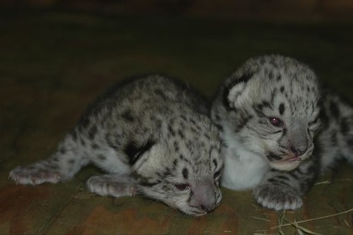 http://www blog snowleopard org Mon, 17 Aug 2009 23:32:14