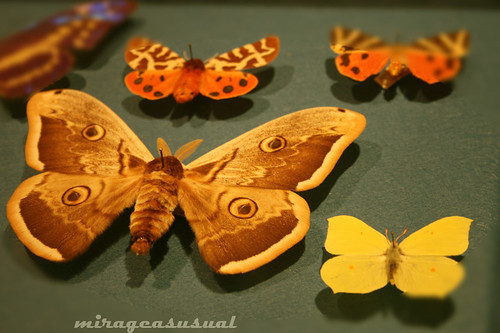 greenish butterflies