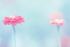 It's a Boy Girl thing... (Lee_Bryan) Tags: pink canon pastel archives babyblue hbw