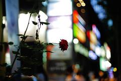 1940/1937 (Decaying)*:z^ (june1777) Tags: snap street seoul night light 5d zeiss contax planar 50mm f14 800 clear gangnam bokeh canon eos shinsadong garosugil carl kyocera e favz