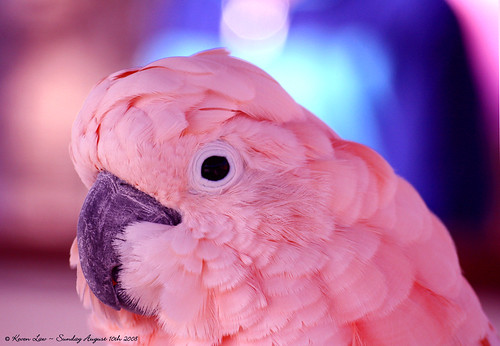 31 Colourful and Gorgeous Photos of Parrots