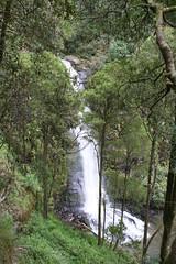 Oz3 254 (Gillian in Brussels) Tags: nature coast waterfall nationalpark australia shore greatoceanroad erskinefalls greatotwaynationalpark
