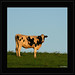 ATOM HEART MOTHER : Hommage à Richard Wright