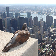Empire State Pigeon (ZeroOne) Tags: nyc newyorkcity newyork bird brooklyn square topf75 cityscape 500v20f view manhattan pigeon perspective longisland queens esb unitednations eastriver empirestatebuilding p rooseveltisland height pidgeon kamera dscv1 410 500x500 mouseion cotcmostinteresting 1500v60f 122008 winner500 100commentgroup thewonderfulworldofbirds kameralehti suurkisa harrastajasarja marculescueugendreamsoflightportal empirestatepigeon dwcffsquare