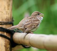 SPATZ (Tauchflodder) Tags: bird zoo cologne kln vogel potofgold naturesfinest platinumphoto amazingamateur naturewatcher