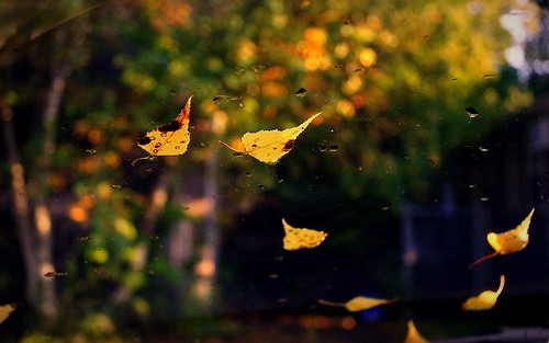 leaves on my windshield