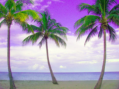 palm trees re-edited (tisogal) Tags: beach florida skimboarding enhanced
