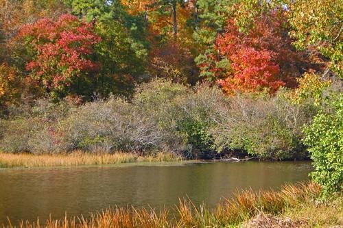 Shady Lake 2