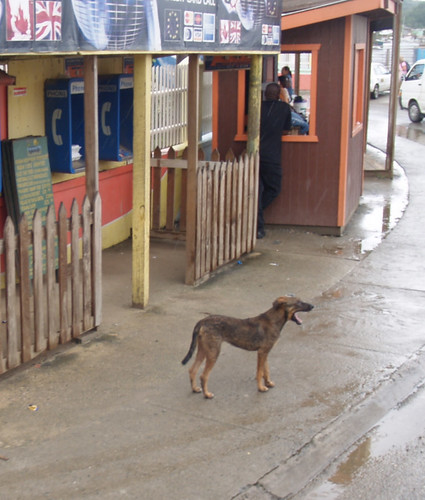 A Dog in Honduras