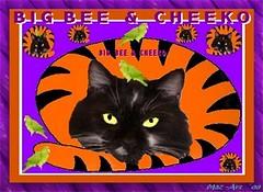 BB & Cheeko (Mazcats1) Tags: uk england cats abstract colour art english closeup artistic digitalart tuxedocats hampshire mycats colourful psychedelic visual upclose rainbowbridge eastleigh bigbee mazart allkindsofanimals photographiceditingoffences