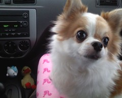 Charlie in the car