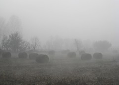 a day n the fog (xNstAbLe) Tags: autumn italy fall fog movie landscape army countryside soft mood silent village none zombie country gray marcia atmosphere eerie spooky campagna horror fields bales nebbia tones turin thriller silenzio campi naturali rotoballe esercito fenomeni abigfave excapture