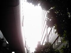 【写真】Sunshine (izone 550)