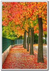 Full fall colors (Mike G. K.) Tags: road autumn trees france color fall colors leaves fence colours foliage strasbourg sidewalk alsace curve hdr photomatix tonemapped tonemapping 1exp anawesomeshot singlejpghdr damniwishidtakenthat vosplusbellesphotos mikegk:gettyimages=submitted