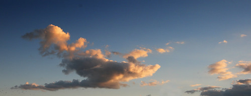 shark cloud