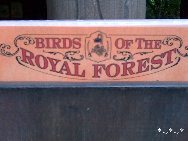 IMG01444-Maharajah-Jungle-Trek-Birds-Royal-Forest