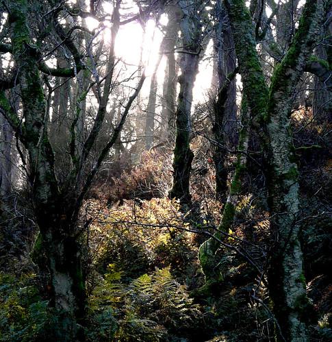 Woodland light 27Nov08