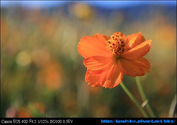 9711-新社花海:Date with Bee_004.jpg