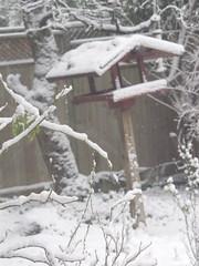 house (catekustanczi) Tags: trees winter snow nature leaves birdhouse treebranches winterscene snowybranches winterybranches