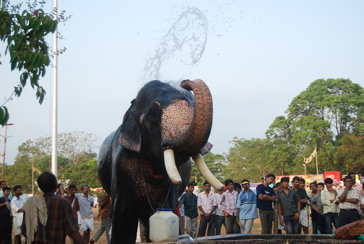 thiruvambadi elephant bath