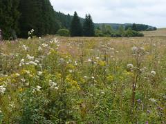 Holzwarchetal bei Mrringen, Ostbelgien (Frank.Vassen) Tags: natura2000 ostbelgien hochstaudenflur natagora mrringen holzwarche holzwarchetal be33047c0