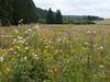 Holzwarchetal bei Mürringen, Ostbelgien (Frank.Vassen) Tags: natura2000 ostbelgien hochstaudenflur natagora mürringen holzwarche holzwarchetal be33047c0
