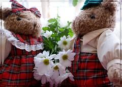 Mr and Mrs Bear :-)) (Patricia Speck) Tags: flowers light red white leaves daisies fur landscape stem tricia plaid patricia dressed teddybears speck mrandmrsbear