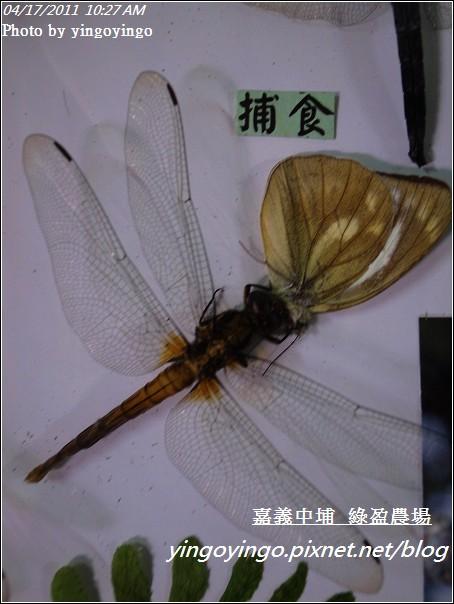 嘉義中埔_綠盈農場20110417_R0019011