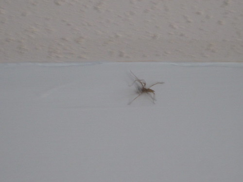 spider in my nephew's room