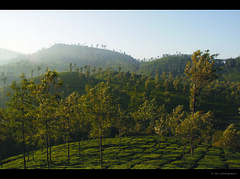 it's getting sunny, Good morning valparai... (Diji's Photography) Tags: travel india nature canon eos sigma dslr 18200 dfc valparai 400d malayalikkoottam kfm3 malayalikkottamkfm3
