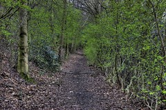 HDR Chorlton Waterpark (Trees)