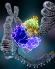 Фото 1 - Генетические тесты бесполезны?