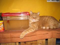 sono amici! (: panti :) Tags: colors giallo rosso colori gatto pesce zampa kissablekat thebiggestgroupwithonlycats pesceroso