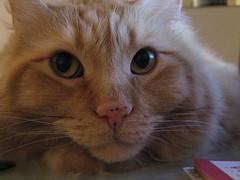 Jasper's sweet face