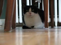 tux (LightRecording) Tags: catnipaddicts o