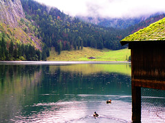 Oberer See (StefanZapf) Tags: knigssee