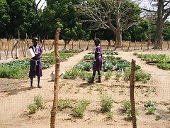 Children watering the vegetables.  March 2008