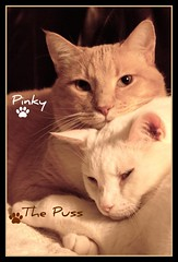 Happy Furry Friday - Hero Worship (Gail S) Tags: cats pinky picnik lovebugs thepuss snugglebunnies bestofcats