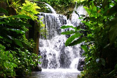 Bonita Jamaica 2