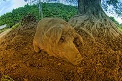 Pig (/\ltus) Tags: japan pig pentax fisheye freehand shizuoka hdr 1xp japanhdr kiwifarm k20d 200807