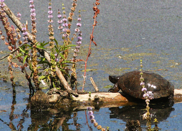 Turtle on Branch