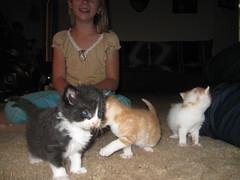 kittens 050